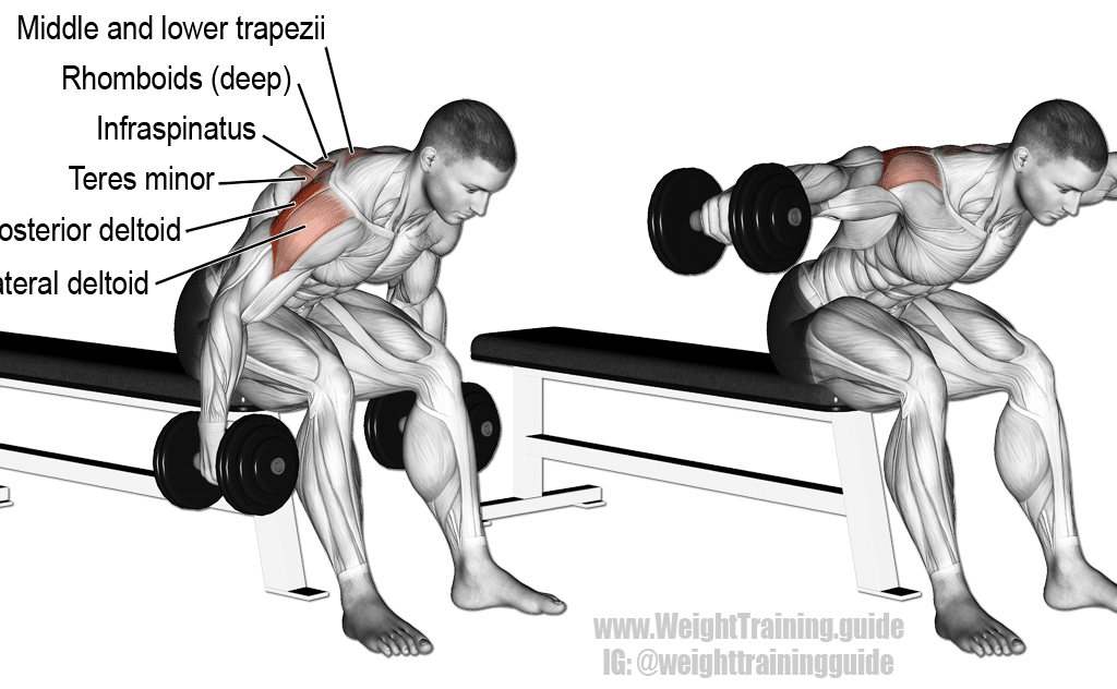 seated-bent-over-lateral-raise