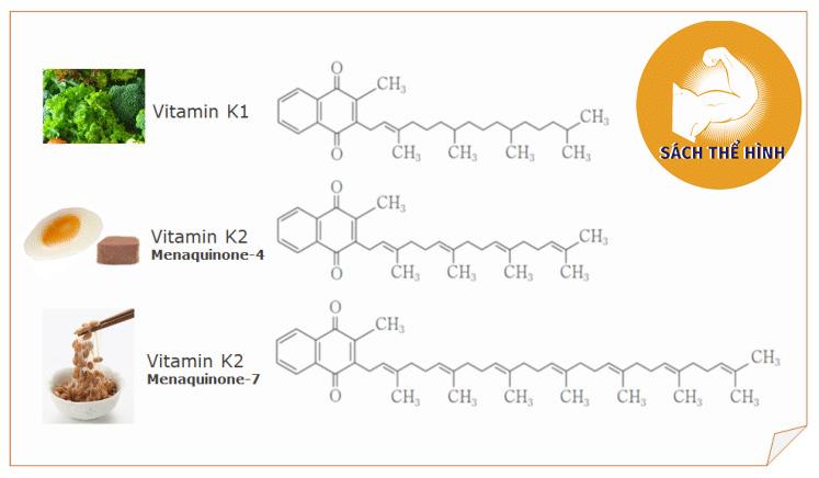 thuc-pham-co-vitamin-k2-mk7