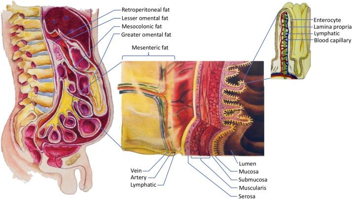 chất béo vùng bụng